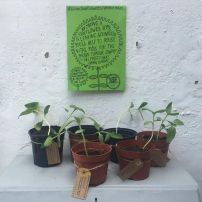 Amy's seedlings 2