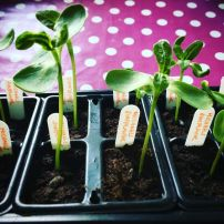 Jayne's seedlings