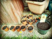 Megan's seeds