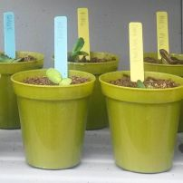 My seedlings